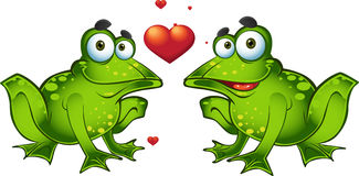 Green frogs in love stock photography