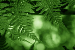Green frond frame. Fern fronds dripping with water Stock Photography