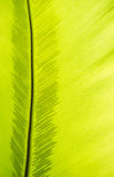 Green frond with spore lines. Close-up image, fern blade with many spore lines Royalty Free Stock Photos