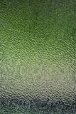 Green frosted Stock Image