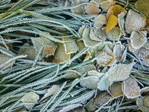 Green frozen grass and frozen leaves Stock Photos