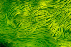 Green Fur royalty free stock images