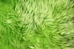 Green fur background Stock Images