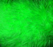 Green fur macro Stock Photo