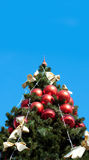 Green fur tree with blue sky Royalty Free Stock Image