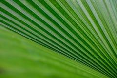 green gömma i handflatan arkivbilder