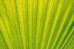 green gömma i handflatan Arkivbild