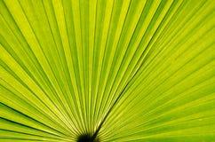 green gömma i handflatan Royaltyfri Fotografi