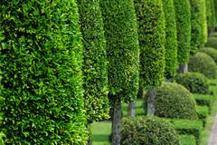 Green Garden Royalty Free Stock Photos