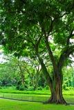Green garden Stock Images