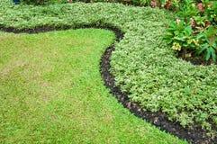 Green garden. Curve of grasses in green garden Royalty Free Stock Photo