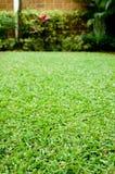 Green Garden. Vertical shot of a green garden Royalty Free Stock Photos