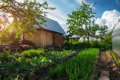 Green Garden Stock Image