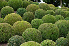 Green garden balls Royalty Free Stock Photos