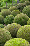 Green garden balls Stock Images