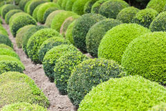 Green garden balls in France Royalty Free Stock Photography