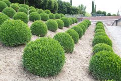 Green garden balls in France Royalty Free Stock Photo