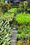 Green garden Royalty Free Stock Image
