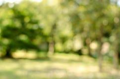 Green garden blurred background Stock Image