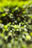 Green Garden Bokeh Stock Photography