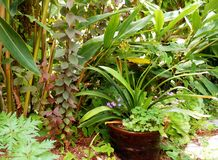 GREEN GARDEN WITH BROWN CERAMIC POT Royalty Free Stock Image
