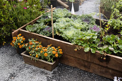 Green garden farming vegetable plants Stock Photos