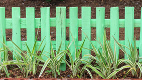 Green garden fence Stock Image