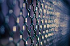Chain link fence background. Green garden fence in sunset. Shallow dof Stock Photography