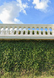 Green garden hedge Royalty Free Stock Image
