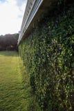 Green garden hedge Stock Image