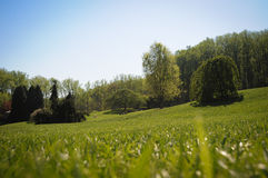 Green garden with lawn and trees Royalty Free Stock Photos