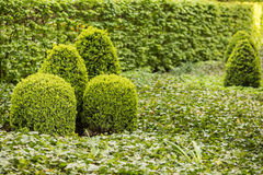 Green garden. Lush green garden, backyard landscaping with bushes Royalty Free Stock Photography