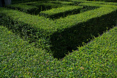 Green garden maze. Garden maze made of green hedge Stock Photo