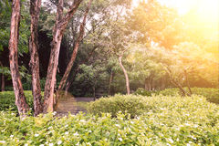 Green garden in the morning at Suan Luang Rama 9 Park Stock Images