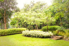 Green garden in the morning at Suan Luang Rama 9 Park Stock Photography