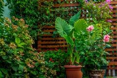 Green garden Royalty Free Stock Photos