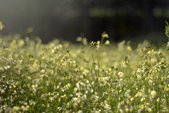Green Garden. A picture of wild flowers on a wild landscape Stock Images