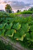 Green Garden Stock Photography