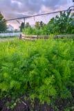 Green Garden Stock Photo