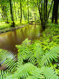 Green Garden - River - Spring Stock Photography