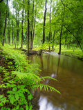 Green Garden - River - Spring Royalty Free Stock Photos