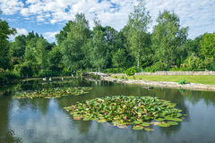 Green garden and summer Smell. Stock Photo