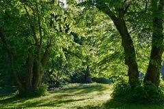 Green garden in summertime Stock Image
