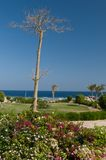 Green garden at the tourist resort. Royalty Free Stock Photos