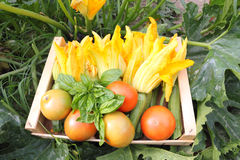 Green garden and vegetables Royalty Free Stock Photos