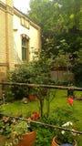 Green garden. View into a green summer garden stock photography