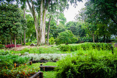 Green garden view with trees, flowers and fruits Stock Photo