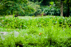 Green garden view with trees, flowers and fruits Royalty Free Stock Photo