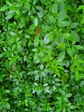 Green garden wall stock images