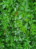 Green garden wall stock images